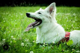 D-022-002-1 %Hundeblog