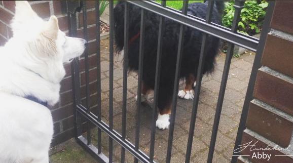 Hundebegegnung-1 %Hundeblog
