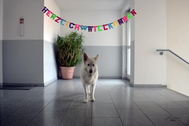 MonatspfotoMai-1 %Hundeblog