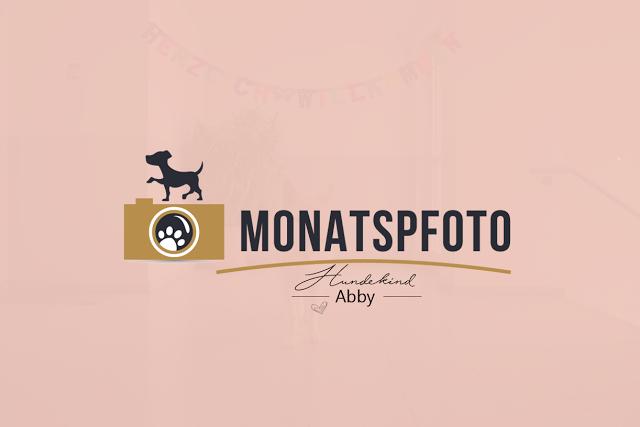 MonatspfotoMai-Vorschau-1 %Hundeblog