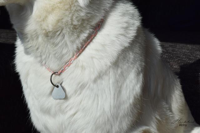 Tragefoto-Detail-1 %Hundeblog