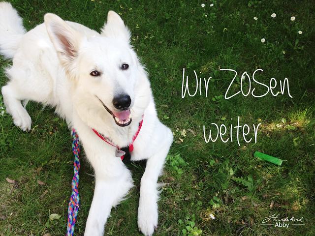 ZOS1-1 %Hundeblog