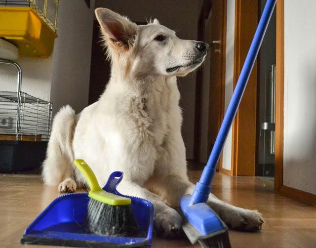 20140205-DSC_0017281429-1 %Hundeblog