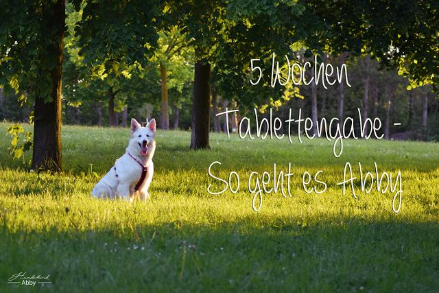 5WochenTablettengabe-1 %Hundeblog