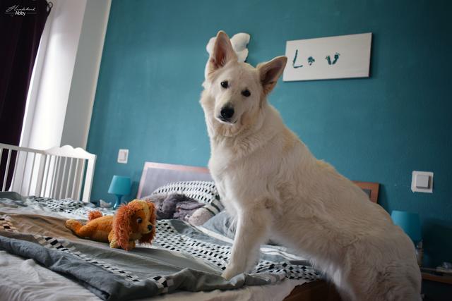 Abbystuetztsichauf-1 %Hundeblog