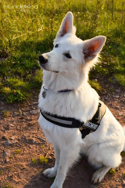 DSC_0561-1 %Hundeblog