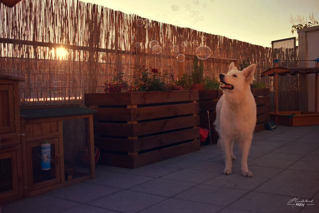 Monatspfoto-Juni-1 %Hundeblog