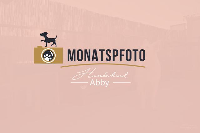 Monatspfoto-Juni-Vorschau-1 %Hundeblog