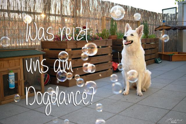 WasreiztunsamDogdance-1 %Hundeblog