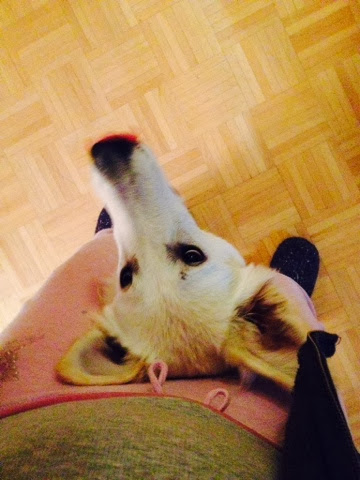 blogger-image-138963899-1 %Hundeblog