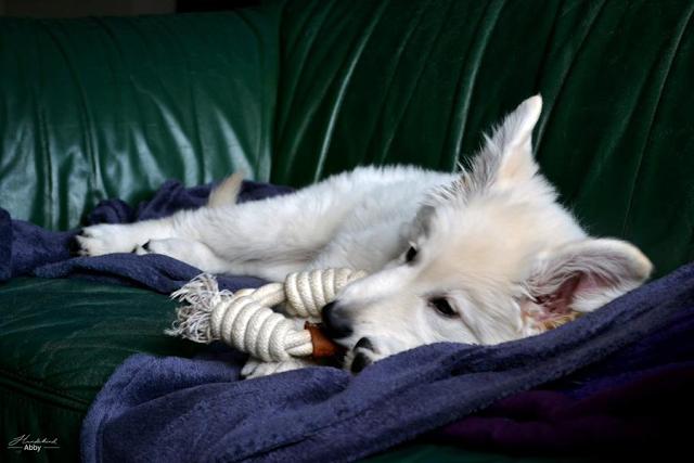 AbbyaufSofa-1 %Hundeblog