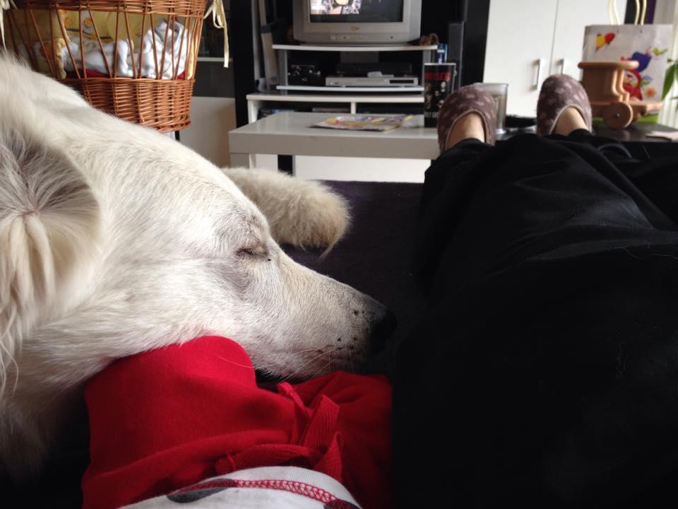 AbbykuscheltmitBaby-1 %Hundeblog
