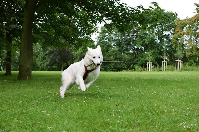 AbbyrenntmitStock-1 %Hundeblog