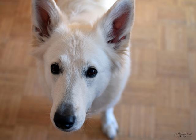Abbyvonoben-1 %Hundeblog