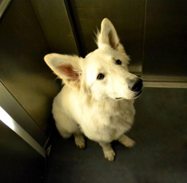 Aufzugtraining-1 %Hundeblog