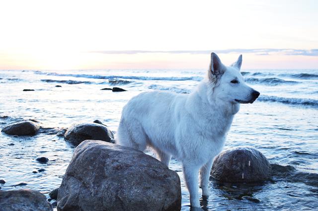 DSC_0075-1 %Hundeblog