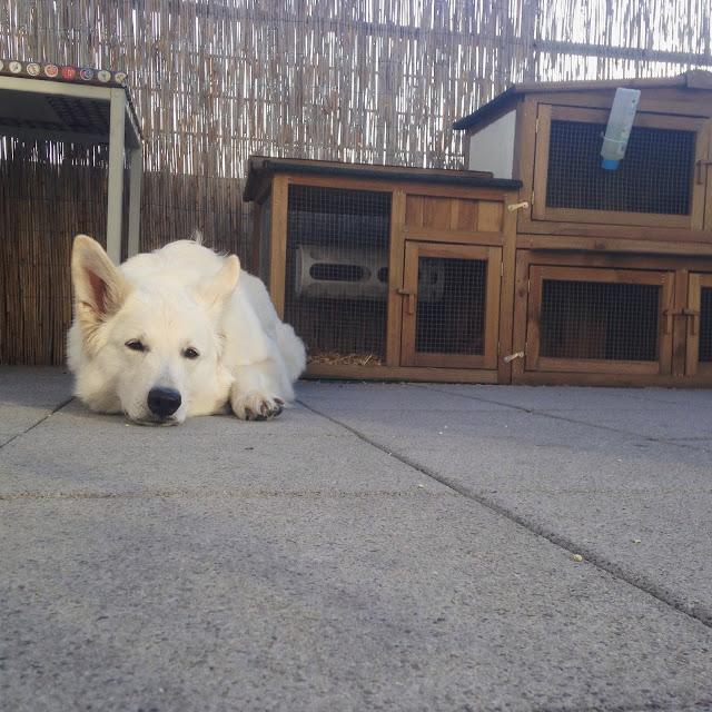 Down-HundekindAbby-1 %Hundeblog