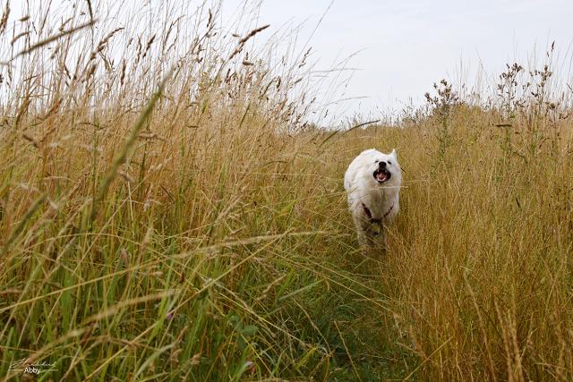 Monatspfoto-Juli-1 %Hundeblog