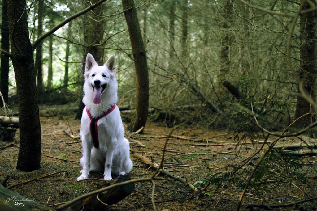 HundekindAbby2-1-1024x683 %Hundeblog