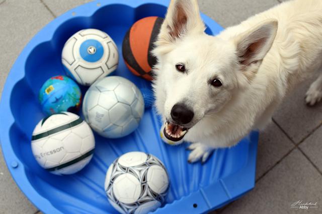 Monatspfoto-August-1 %Hundeblog