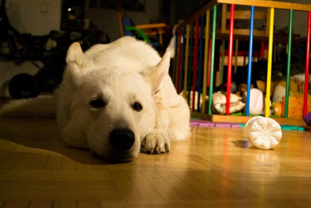 Abby-Bloggerhund-1 %Hundeblog