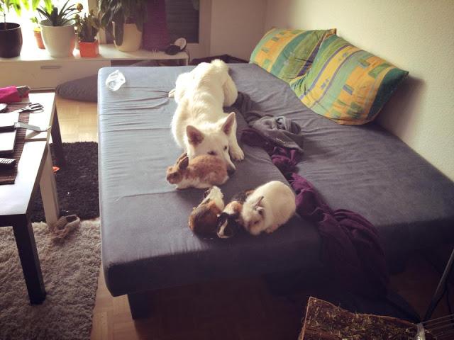 AbbyalsBabysitter-1 %Hundeblog