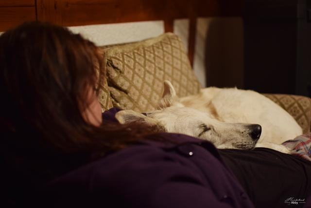 Abbykuschelt-3 %Hundeblog