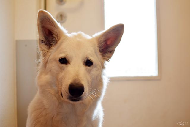 AbbyvorderTuer-1 %Hundeblog
