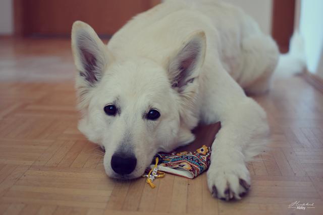 Leckerchenbeutel-1 %Hundeblog