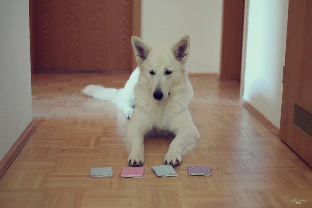 Schnueffelspiel-1 %Hundeblog