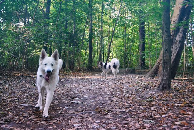 DSC_0862-1 %Hundeblog