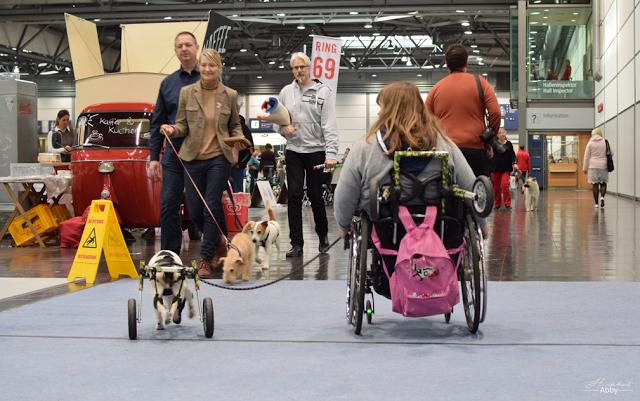 Rollstuhl-Hund