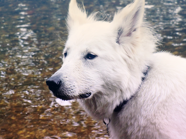 AbbySeitenprofil-bearbeitet-1 %Hundeblog