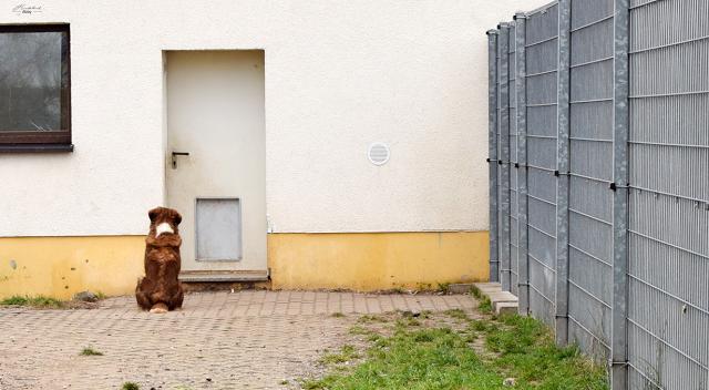 Hund-wartet-Tierheim-Eilenburg-1 %Hundeblog