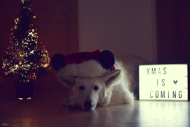 Unser Monatspfoto Dezember