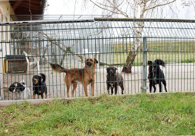 Tierheim-Eilenburg-Hunde-1 %Hundeblog