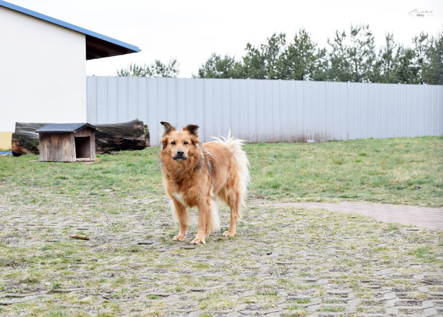 Tierheim-Eilenburg1-1 %Hundeblog