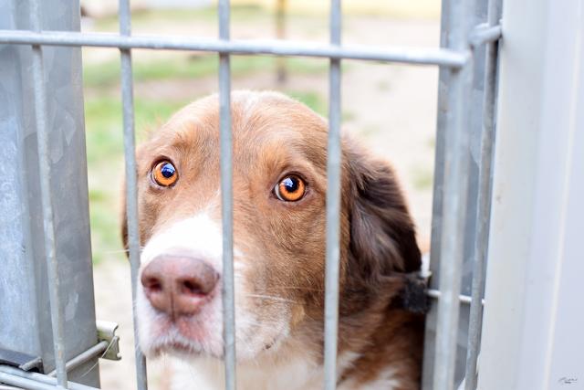 Traumhund-Tierheim-Eilenburg-1 %Hundeblog