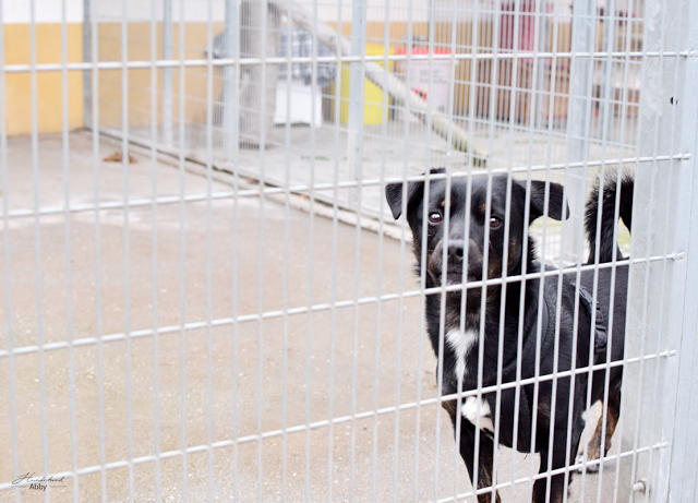 kleiner Hund am Zaun.