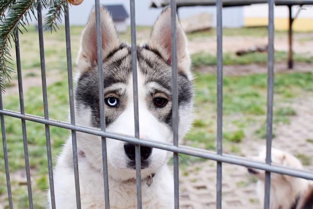 zweifarige-Augen-Tierheim-Eilenburg-1 %Hundeblog